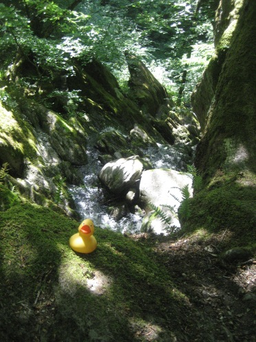 Ducktales by the ghyll in UK