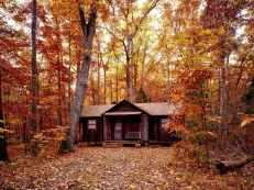 autumn autumn leaves beautiful color